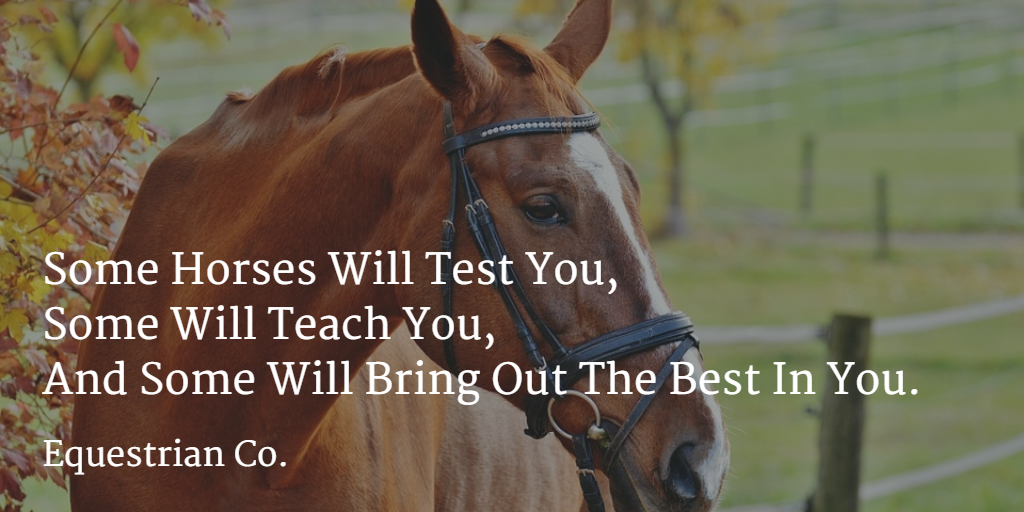 Some horses will test you, some will teach you, and some will bring out the best in you.