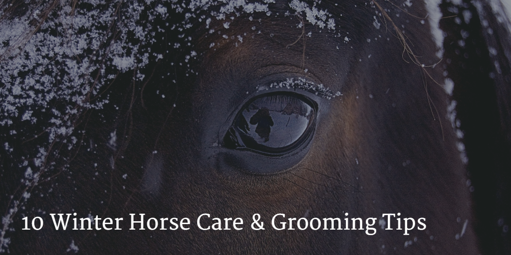 Winter Horse Grooming Tips
