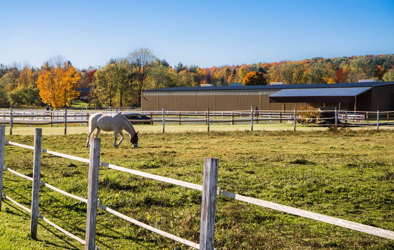 Horse in an paddock with electric fence