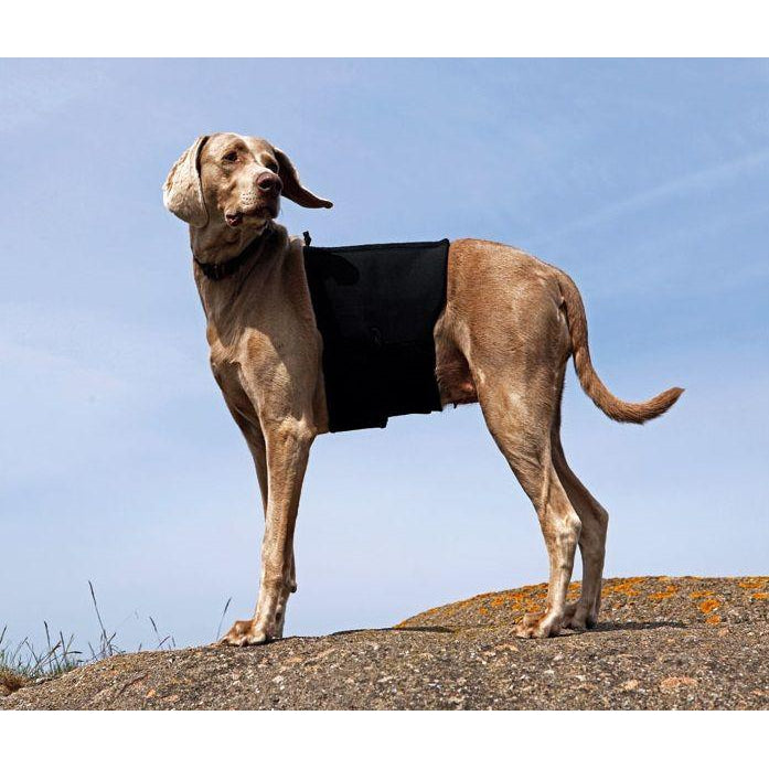 Back on Track® Ceramic Infused Dog Back Brace