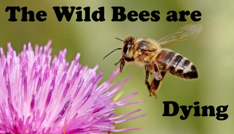 How Does The Decline Of Wild Bees Affect The Honey