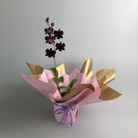 Dark Purple Dendrobium Orchids - Orchids - Luxe Florist - - Eat Cake Today - Birthday Cake Delivery - KL/PJ/Malaysia