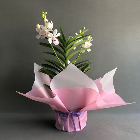 White with Pink Freckles Mokara Orchid - Orchids - Luxe Florist - - Eat Cake Today - Birthday Cake Delivery - KL/PJ/Malaysia