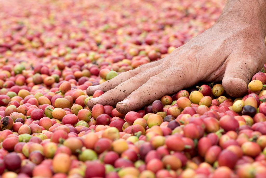 What Makes 100% Kona Coffee More Expensive?