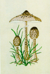 Lepiota Mushrooms