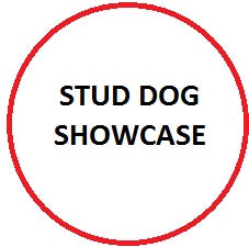 2018 Loveland Stud Dog Showcase-FILL OUT AND SUBMIT THE FORM BELOW BEFORE CHECKOUT