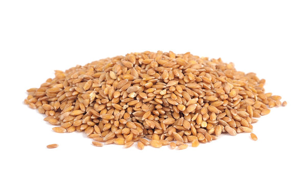 Einkorn Wheat Grain - Hulled Organic
