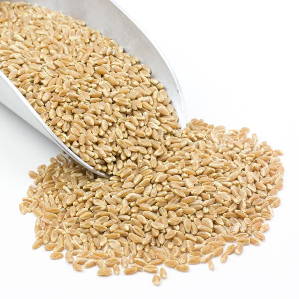 Wheat Berries - Hard Red Spring Certified Chemical Free (Bronze Chief)