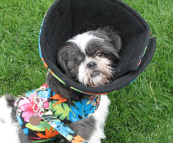 Cuddle Cone Dog Cone Soft Alternative to Cone of Shame