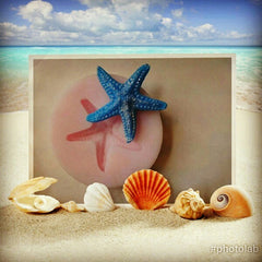 Starfish Mini Silicone Mould