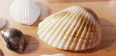 Seashells 6 cavity Silicone Mould (Real Shells size)