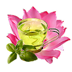 Green Tea and Lotus Fragrant Oil