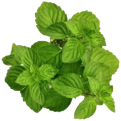 Spearmint Flavour (Oil Based) 25ml