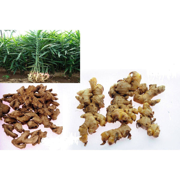 Dried Ginger - E-Aroma