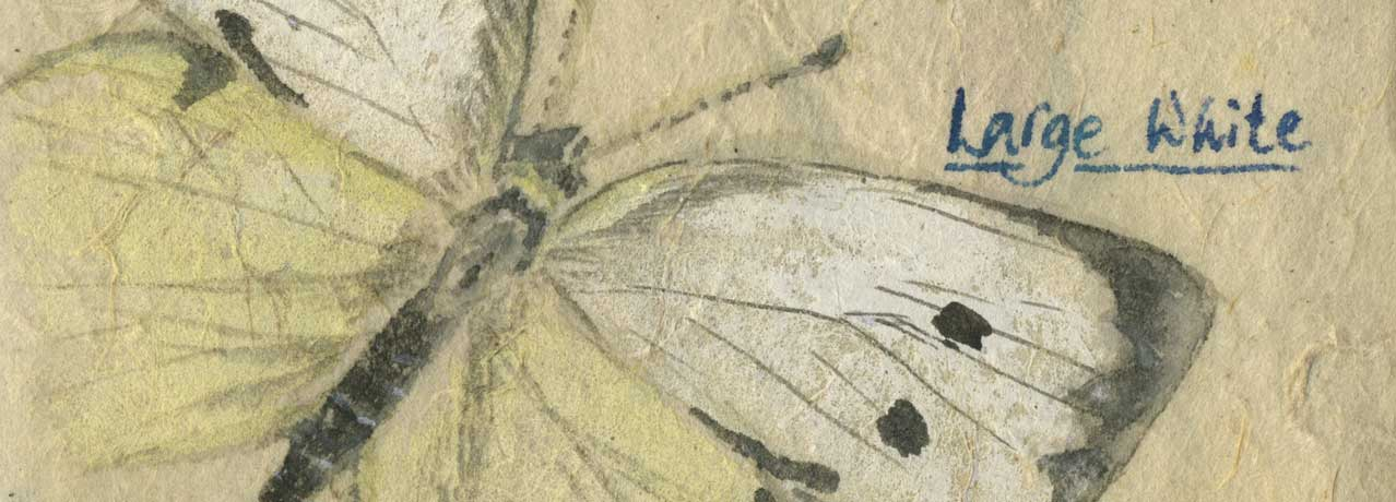 Large White butterfly watercolour painting