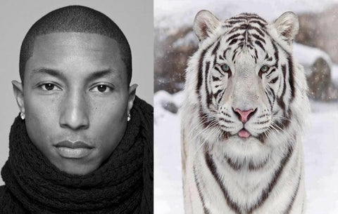 Pharrell-snow-tiger