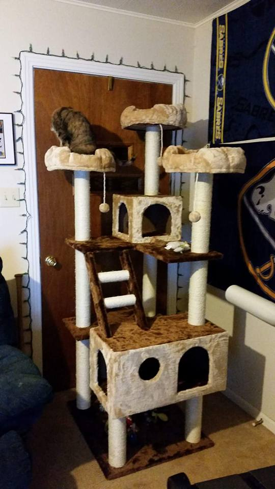 Beverly Hills Kitty Mansion