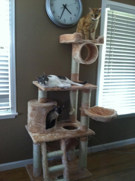 Cats looking happy on their Boston model Kitty Mansion