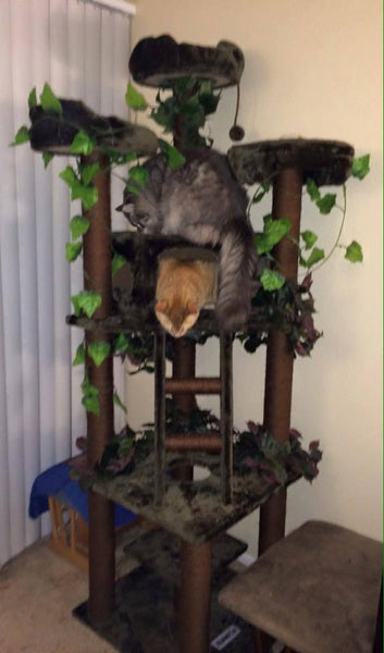 Redwood cat condo by Kitty Mansions