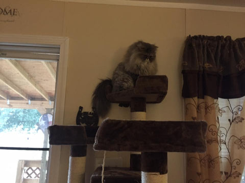 Majestic cat on his Kitty Mansion