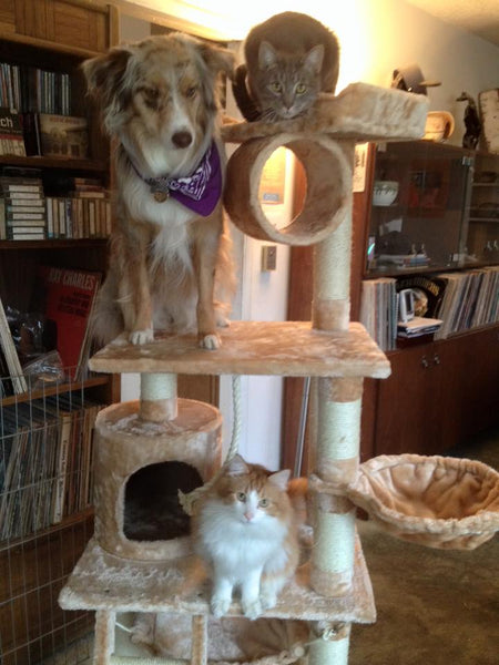 Dog on Kitty Mansions cat tree
