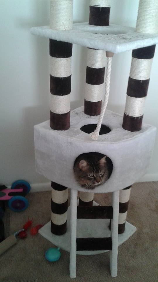 Savannah cat tree by Kitty Mansions