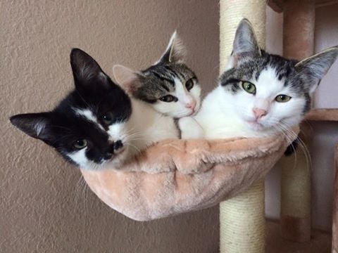 Three cats in a basket of their Kitty Mansions cat condo
