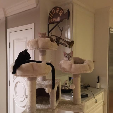 White Coffee Cat Tree by Kitty Mansions
