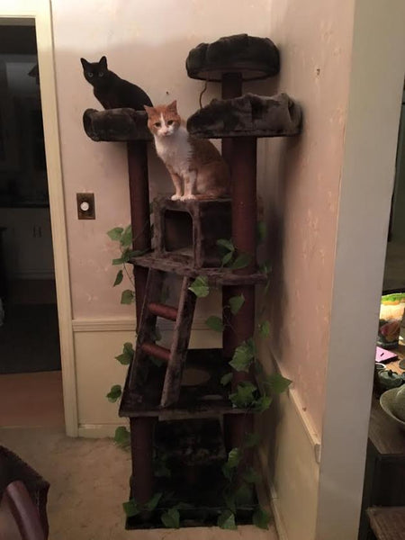 Cats enjoying lounging on their Kitty Mansions cat tree