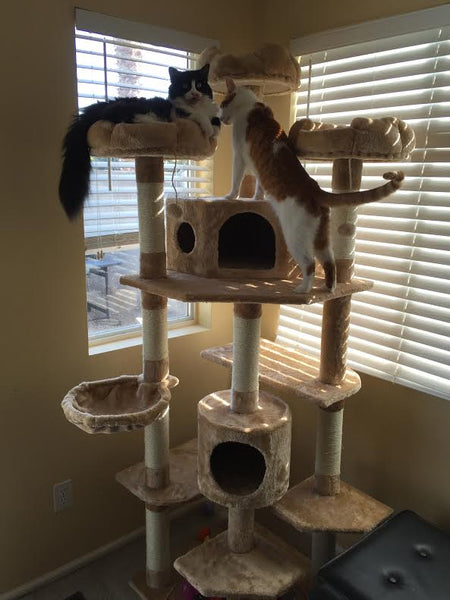 Denver cat tree furniture by Kitty Mansions