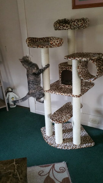 Cat climbing Safari cat condo by Kitty Mansions