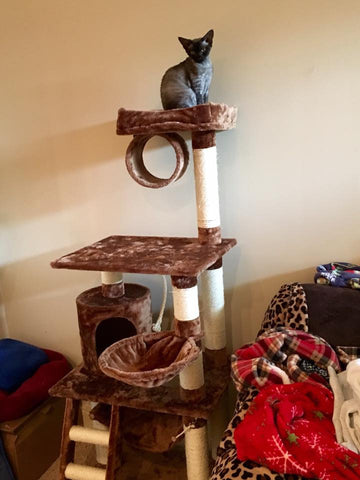Cute cat on Boston cat condo by Kitty Mansions