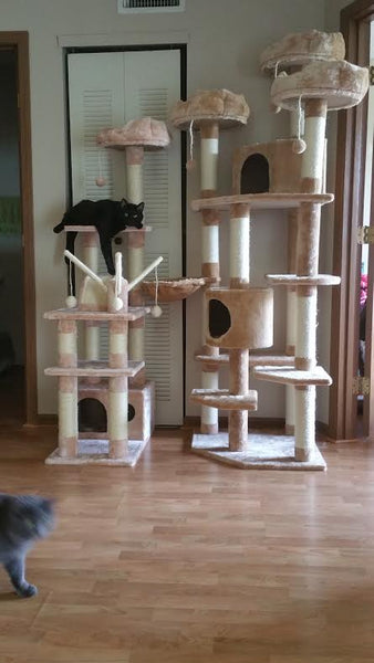 Denver and Charlotte cat tree by Kitty Mansions