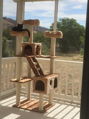 Beverly Hills Kitty Mansions cat tree in a catio