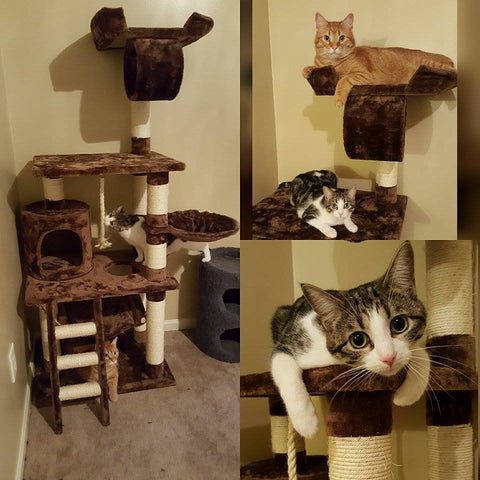 Adorable cat on Boston model cat tree by Kitty Mansions