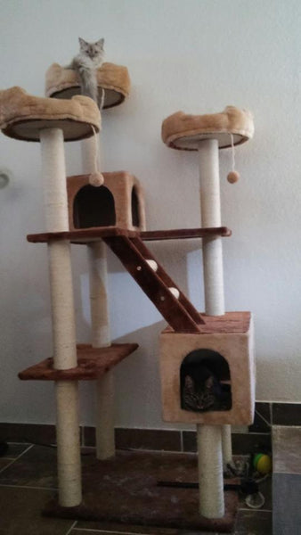 Cat sitting on the top perch of Beverly Hills model Kitty Mansion cat condo