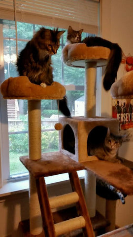 Beverly Hills cat furniture by Kitty Mansions
