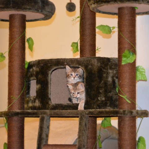 Foster kittens on their Redwood Cat tree by Kitty Mansions