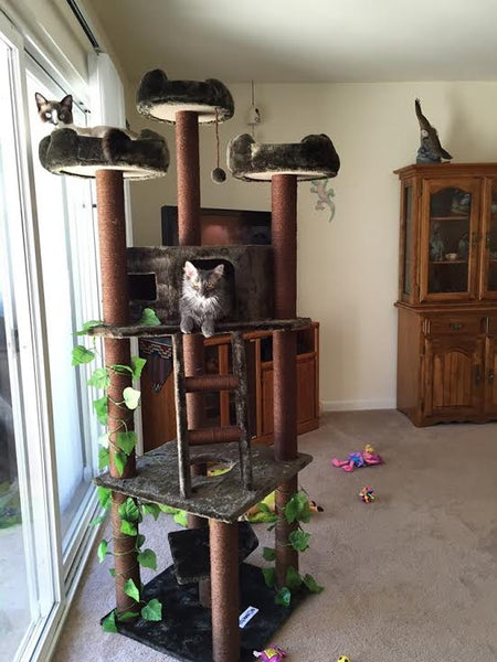 Cats hanging out on their cat condo by Kitty Mansions