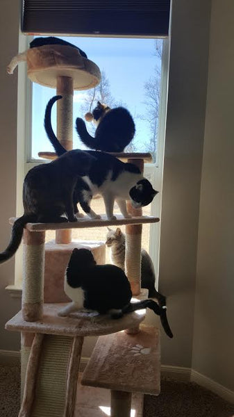 Multiple cats on Shanghai cat tree by Kitty Mansions