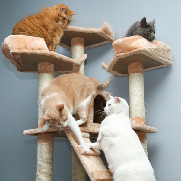 Kitten Wars on their Bel Air model Kitty Mansion cat tree