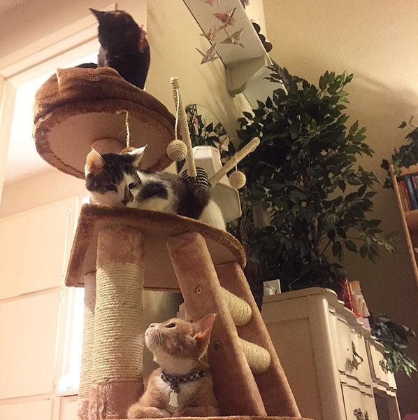 Three tier Kitty Mansions cat condo with cute cats