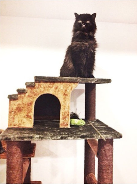 Princess Monster Truck on top of her Kitty Mansion cat tower