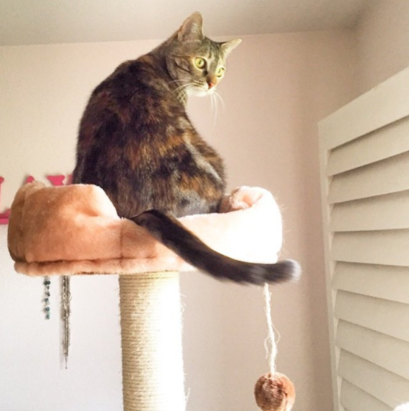 Cat sitting in a cat tower by Kitty Mansions