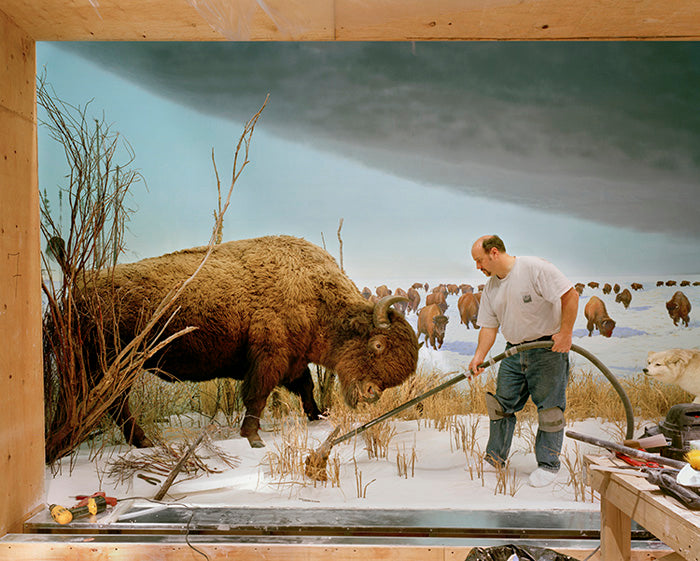 Man With Buffalo