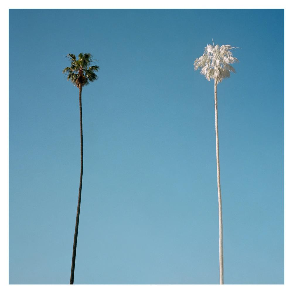 George Byrne - White Palm - 2 sizes, $2,100-$4,850, Archival Pigment Print on Archival Substrate, Framed in White,  - Bau-Xi Gallery