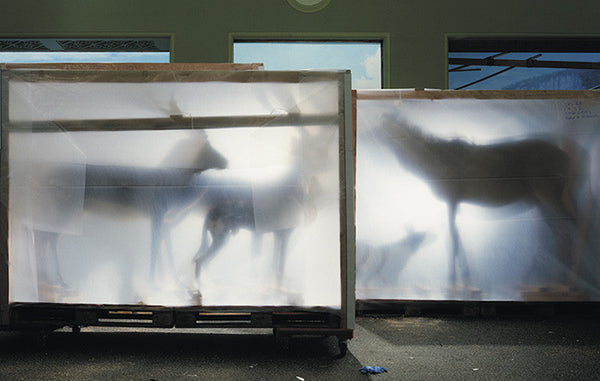 Richard Barnes - Backlit Hoofed Animals from Animal Logic, Chromogenic Print Mounted to Archival Substrate, Framed in White with Plexiglass,  - Bau-Xi Gallery