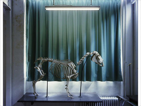 Richard Barnes - Left Panel, Horse, Musee Fragonard, Chromogenic Print Mounted to Archival Substrate, Framed in White with Plexiglass,  - Bau-Xi Gallery