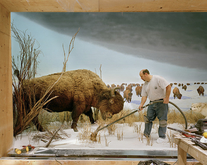 Richard Barnes - Man with Buffalo from Animal Logic - available in 3 sizes, Chromogenic Print Mounted to Archival Substrate, Framed in White with Plexiglass,  - Bau-Xi Gallery