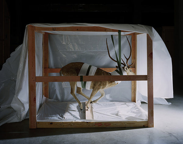 Richard Barnes - Smithsonian, Suspended Deer, Chromogenic Print Mounted to Archival Substrate, Framed in White with Plexiglass,  - Bau-Xi Gallery